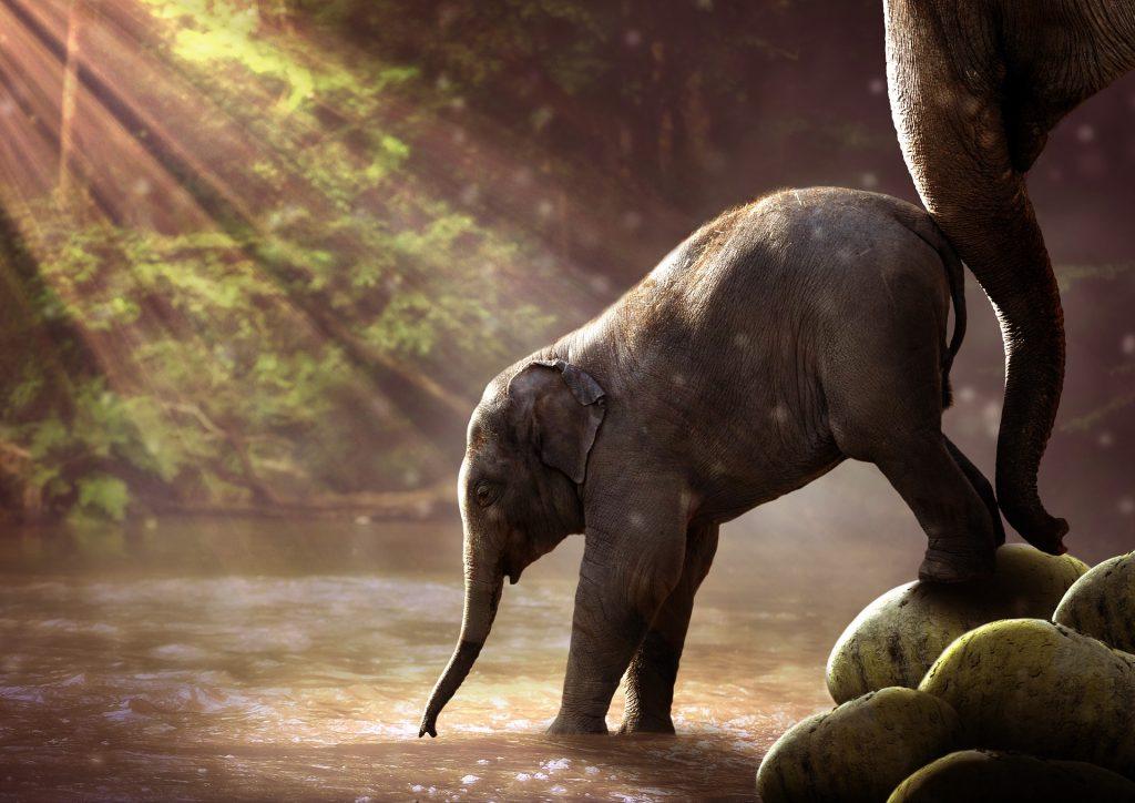 Nudge symboliserad med elefanter.